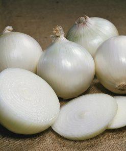 produzione semi cipolla a tunica bianca agostana di chioggia