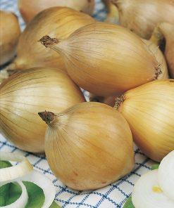 produzione semi cipolla a tunica gialla ailsa craig