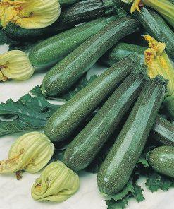 produzione semi zucchino ambassador