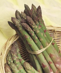 produzione semi asparago argenteuil