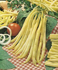 produzione semi fagiolo bergold