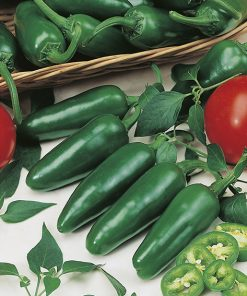 produzione semi peperone bilja