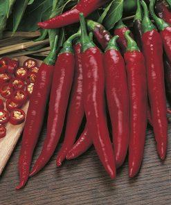 produzione semi peperone cayenne long slim