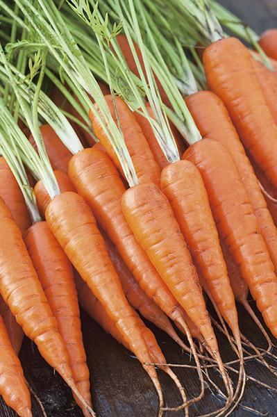produzione semi carota chantenay red cored 2