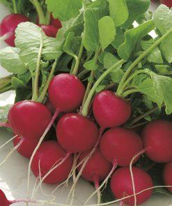 produzione semi ravanello cherry belle