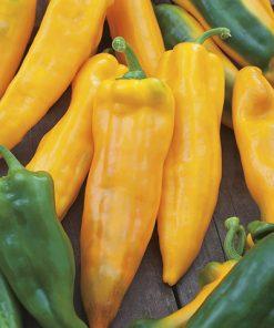 produzione semi peperone corno di toro giallo