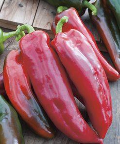 produzione semi peperone corno di toro rosso