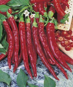 produzione semi peperone daja