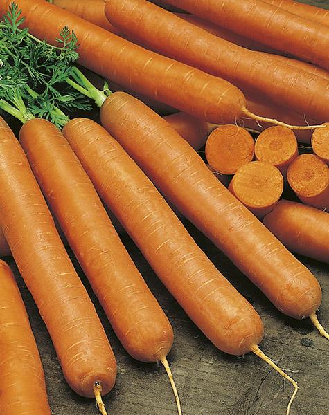 produzione semi carota ds2780