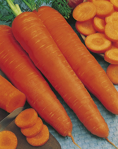 produzione semi carota flakke 2