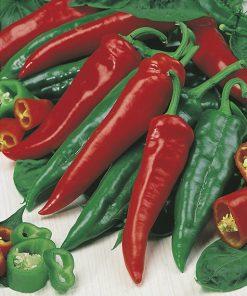 produzione semi peperone hoja