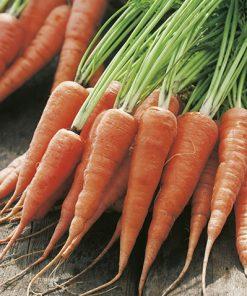 produzione semi carota kuroda