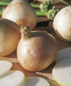 produzione semi cipolla a tunica gialla liria