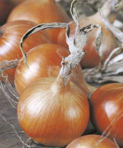 produzione semi cipolla a tunica gialla medys