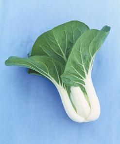 produzione semi brassica orientale packchoi white