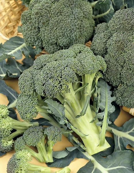 produzione semi cavolo broccolo ramoso calabrese sel. rapid