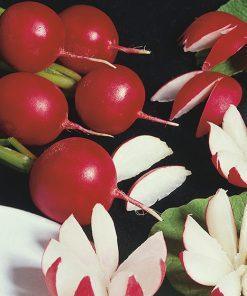 produzione semi ravanello redo