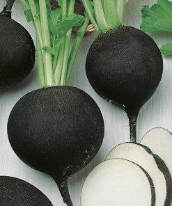produzione semi ramolaccio runder schwarzer winter