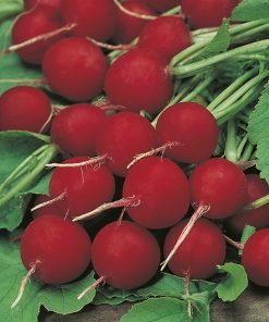 produzione semi ravanello saxa 2