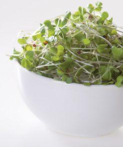 produzione semi semi da germoglio broccoli raab