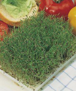 produzione semi semi da germoglio carrot
