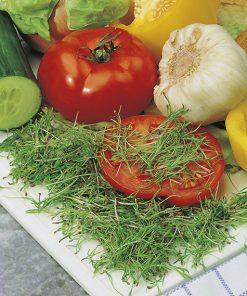 produzione semi semi da germoglio fennel