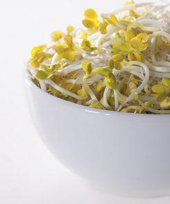 produzione semi semi da germoglio radish daikon