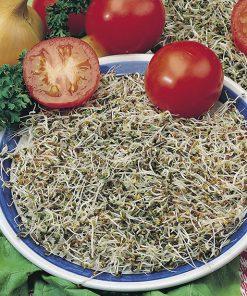 produzione semi semi da germoglio alfaalfa