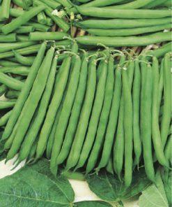 produzione semi fagiolo slenderette