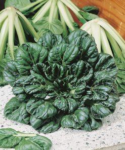 produzione semi brassica orientale tatsoy