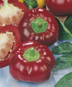 produzione semi peperone topepo rosso