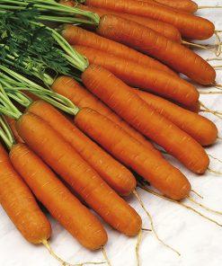 produzione semi carota touchon