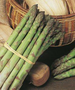 produzione semi asparago uc157f1