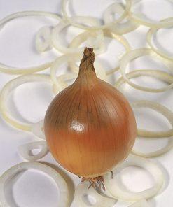 produzione semi cipolla a tunica gialla valenciana tardia de exportation