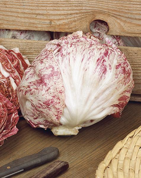 produzione semi cicoria variegata di castelfranco