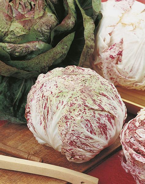 produzione semi cicoria variegata di lusia
