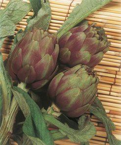 produzione semi carciofo violet de provence